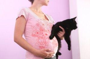 embarazo gato