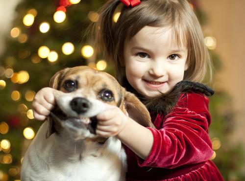 baby-beagle-cara-de-peste-haha-cute-dog-Favim.com-132484